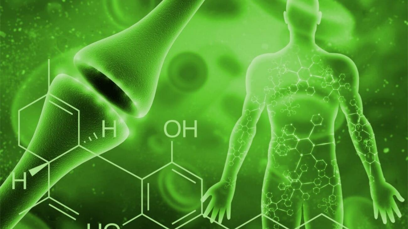 ECS green