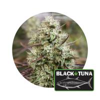 Black Tuna by TBTG