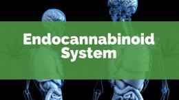 endocannabinoid-system-1-260x146
