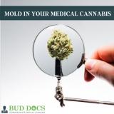 florida-medical-marijuana-mold